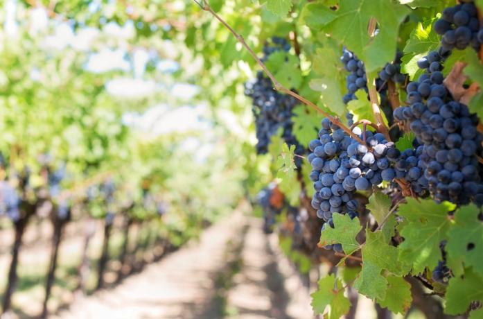 Hoe zit het met wijnproductie-en verbruik wereldwijd?